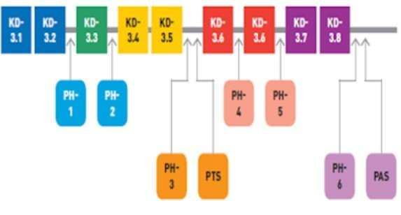 penilaian pengetahuan K13 SMP